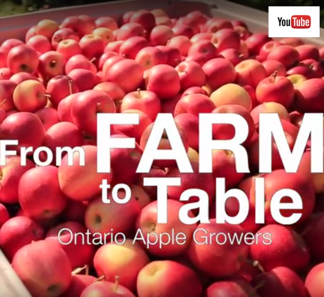 Ontario apple industry at a glance (Video)